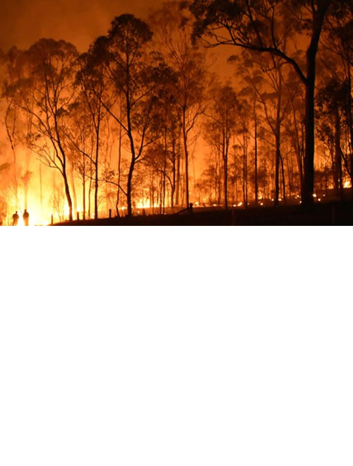Wildfire response microsimulation